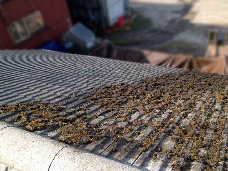 Example of a roof receiving the Roofman moss removal treatment.