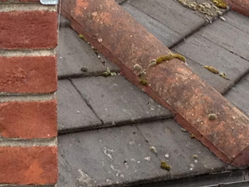 An example of a roof prior to being cleaned and receiving algae removal treatment.